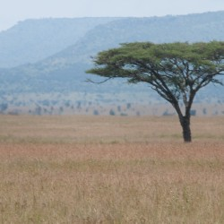 When to go to the Serengeti