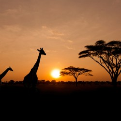 When to go to Tanzania