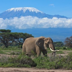 When To Go Mount Kilimanjaro