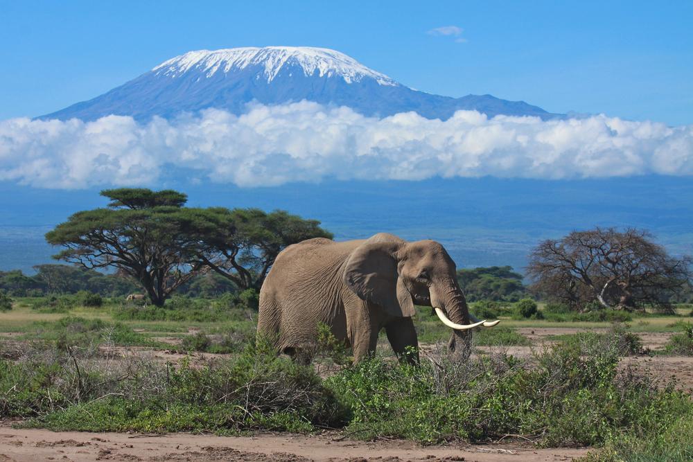 When to go to Mount Kilimanjaro