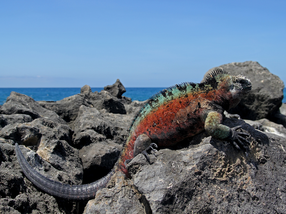 When to Go to the Galapagos Islands