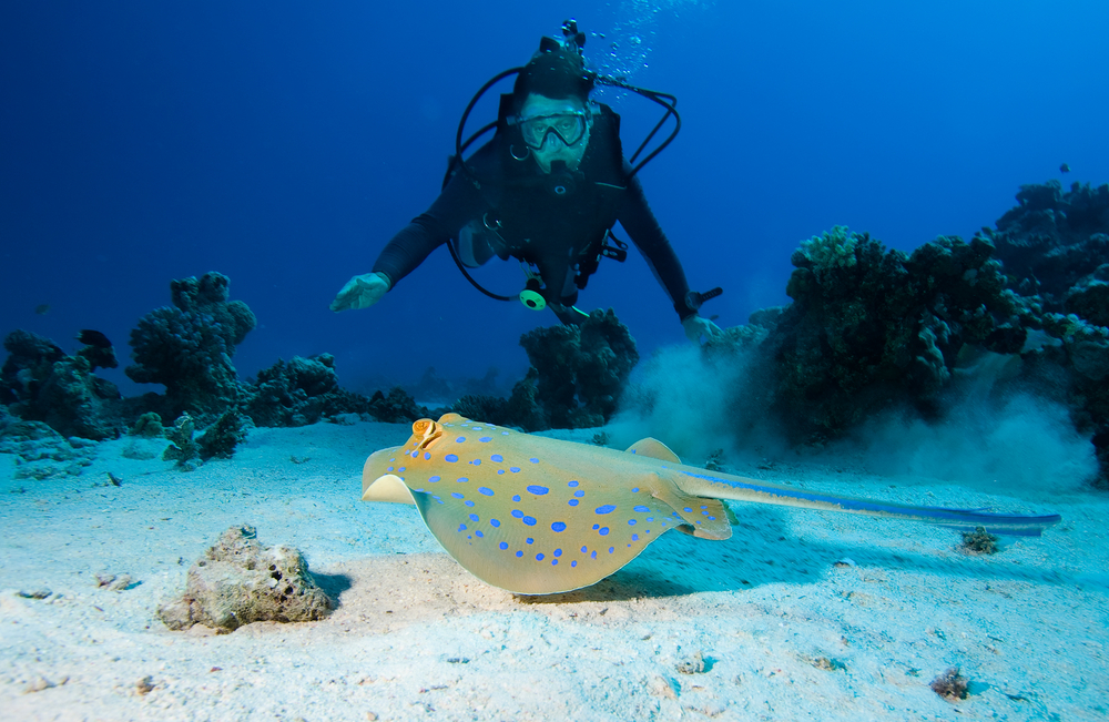 When to go to the great barrier reef best time when to go - Best place to dive the great barrier reef ...